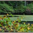 平成17年 9月23日 白駒の池