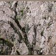 平成19年 4月 1日 身延山久遠寺