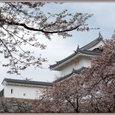 平成19年 4月 7日 舞鶴城公園