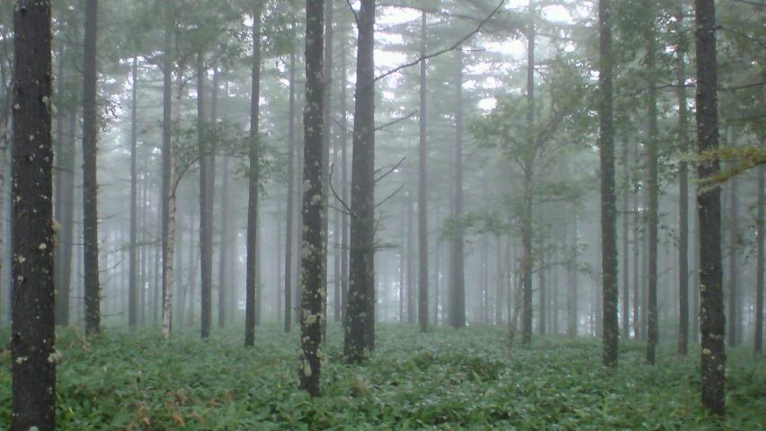 八千穂霧雨高原