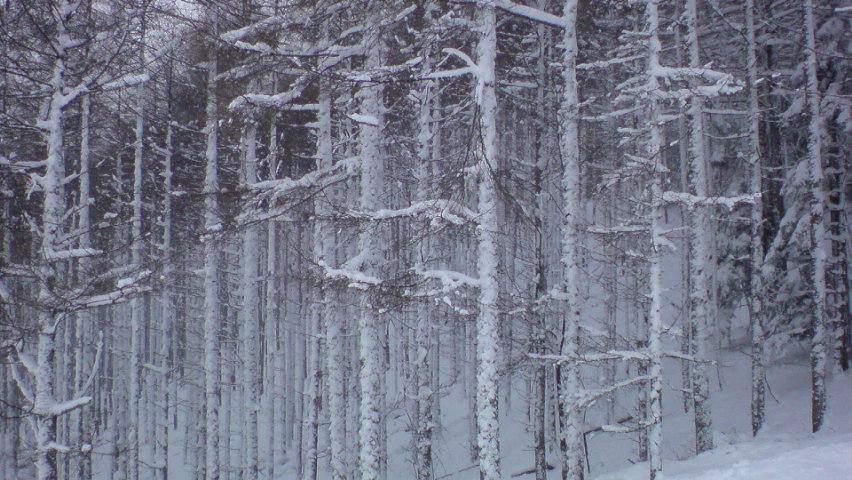 八千穂スキー場