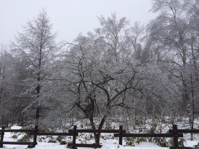 八千穂雨氷高原